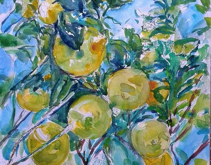 Lemons in the tree at Zebbug by Doranne Alden Caruana
